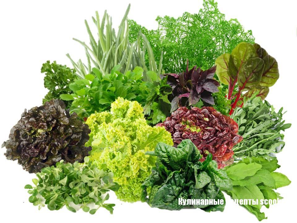 Какую выбрать зелень для салата
